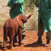 elefantenbaby-2